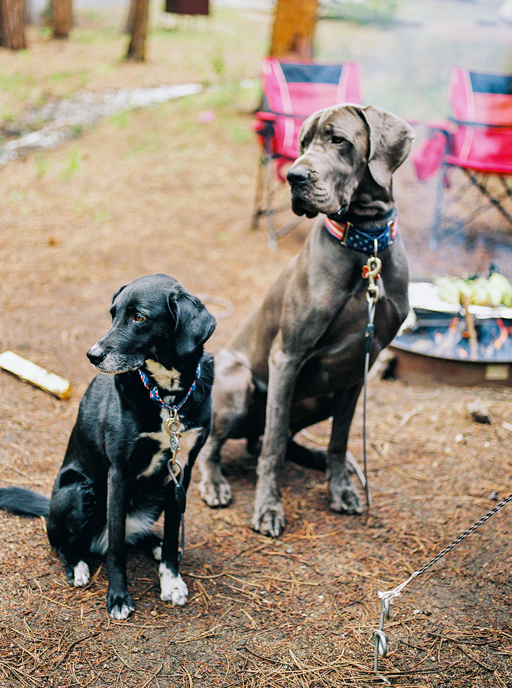 two dogs standing by the camp fire in Rocky Mountain State Park