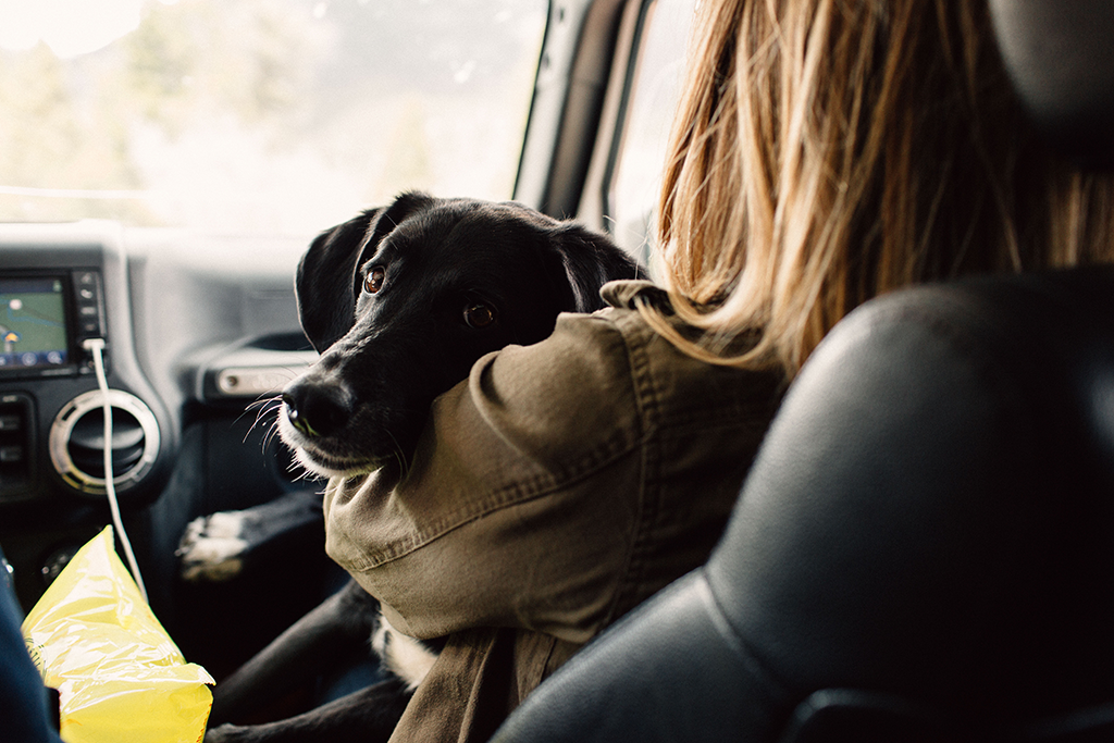 road tripping with your puppy dog