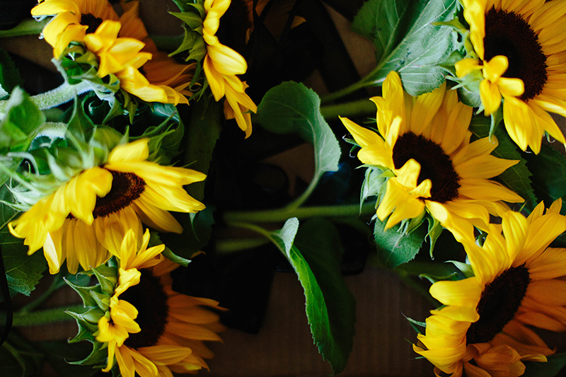 beautiful sunflowers grouped together bridal bouquet